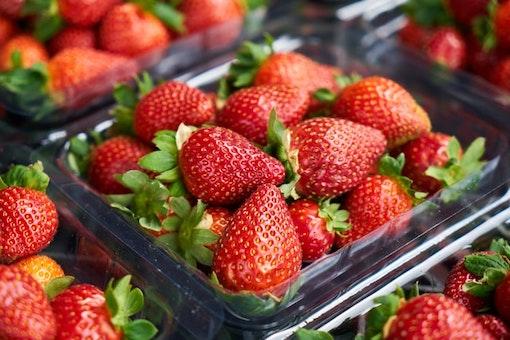 Strawberry Fair at Midsummer Common in Cambridge
